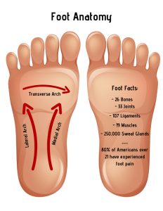 Foot Pain Causes Toe Ball Arch Heel Pain With Treatment